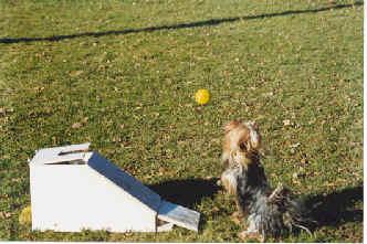 flyball machine